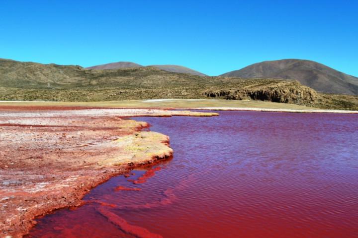 Tour a los géisers de Puchuldiza, el Parque Nacional Volcan Isluga y el salar de Coipasa