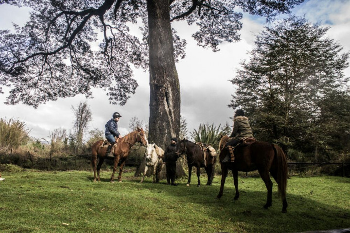 Tour por Bosquepiedra y el Parque Nacional Chiloé
