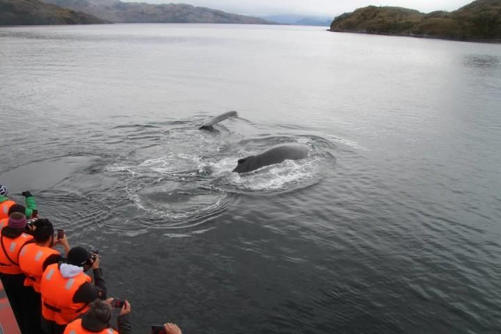 Navegación a las Islas Magdalena y Marta desde Punta Arenas