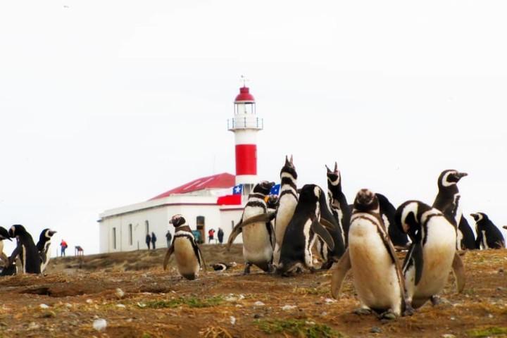 Crucero Australis Ruta de Darwin desde Punta Arenas