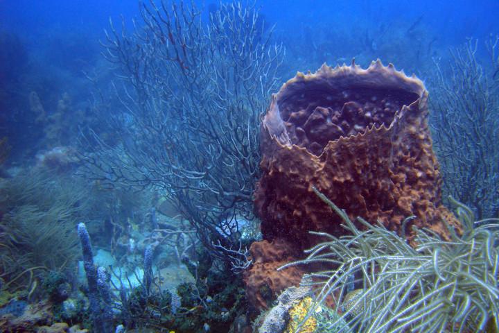 Mini curso de buceo en las Islas del Rosario