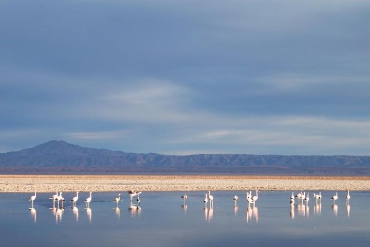 Tour Piedras Rojas, Lagunas Altiplánicas, Salar de Atacama