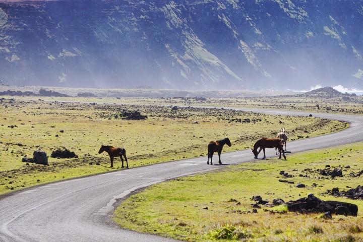 Ruta Identidad y Naturaleza, Arauco Chile