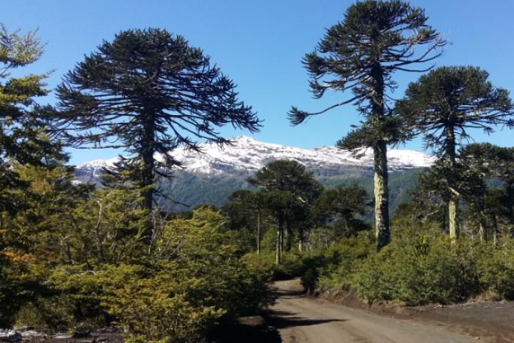 Trekking por el Parque Nacional Huerquehue (octubre-abril)