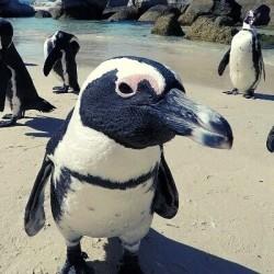 Reserva Pingüino de Humboldt