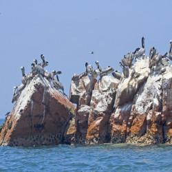 Navegación por las islas Palomino