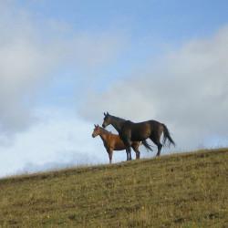 Experiencia patagona en el Campo Bonanza