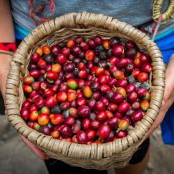 Visita a una finca cafetera en Antioquia