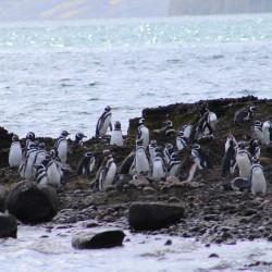 """Queilen """"En la ruta de pingüinos y delfines"""""""