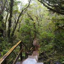 Trekking en el Parque Nacional Alerce Andino
