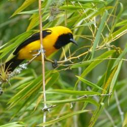 Tour de avistamiento de aves en la Reserva Natural Alto de San Miguel