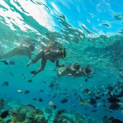 Tour de snorkel en la barrera de coral