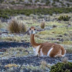 Tour por la Reserva Nacional Pampa Galeras