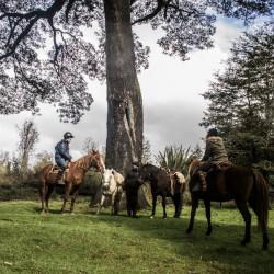 Cabalgata de día completo por la cordillera de Piuchén