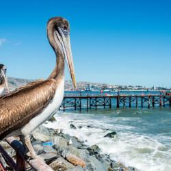 Navegación por la bahía de Valparaíso