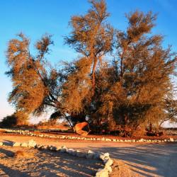 Tour a los pueblos salitreros y al oasis de Pica