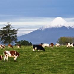 Excursión al volcán Osorno y visita a cervecería artesanal