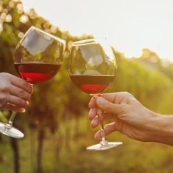 Visita a Viña Santa Rita, cena en un restaurante y fiesta en un club