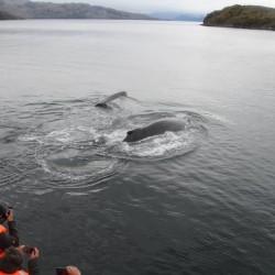 Full day ballenas, pingüinos y glaciares