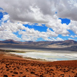 Tour al Parque Nacional Salar de Huasco
