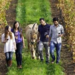 Tour del vino y la gastronomía chilena en los alrededores de Santiago