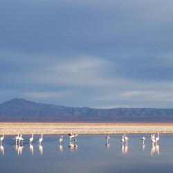 Tour al Salar de Atacama y Toconao
