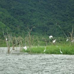 Tour de avistamiento de aves en los alrededores de Cartagena