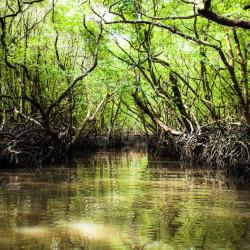 Tour a los manglares de La Boquilla