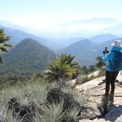 Full Day Senderismo Mirador Bosques de Palma