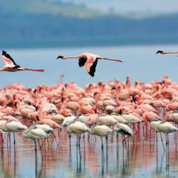Tour al Santuario de Fauna y Flora Los Flamencos y a la Ranchería Wayuú