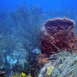 Tour de buceo a las Islas del Rosario