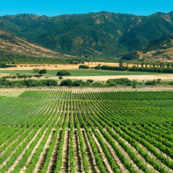 Tour por Viña Lapostolle y Viu Manent en el valle de Colchagua