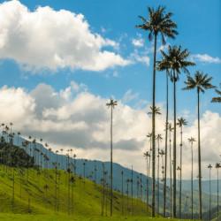 Tour por Salento, el valle de Cocora y Filandia
