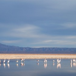 Tour al Salar de Atacama, Poblado de Toconao y Quebrada de Jere
