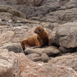 Navegación a las loberías de las islas Las Hermanas (diciembre-marzo)